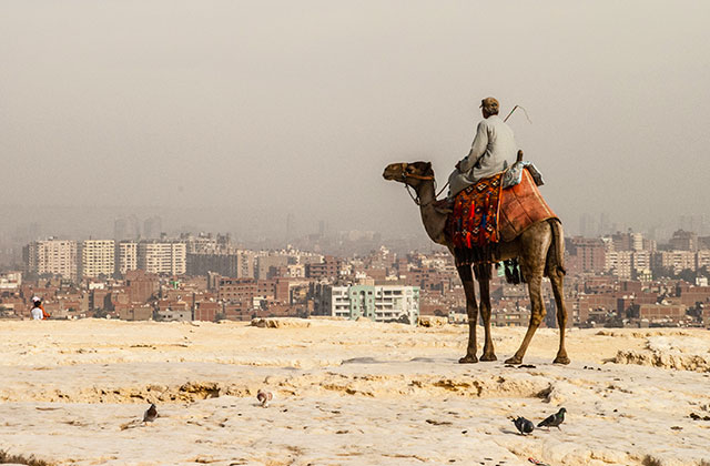 Camel looking over the Cairo Cityscape, Egypt | by Flight Centre's Talia Schutte
