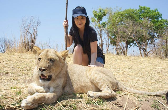 Patting a Lion, Zimbabwe |by Flight Centre's Aliescha Rattanas