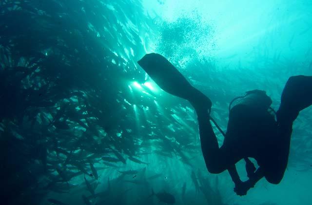 Admire the Marine Life, off Sabah, Malaysia