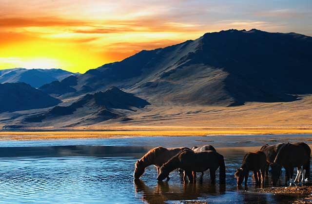 Horses, Mongolia