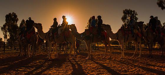 Uluṟu / Ayers Rock: Camel Tour