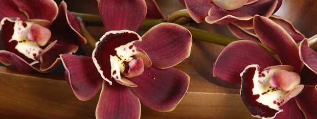 Bali Travel - Lotus Flower