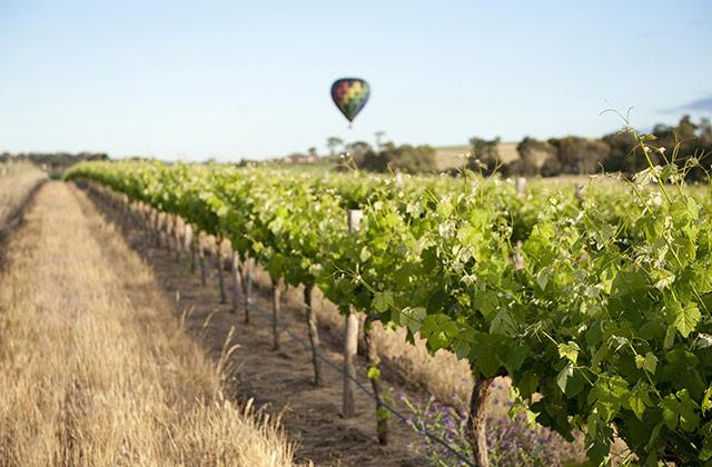 Hot Air Ballooning over the Barossa | © SATC