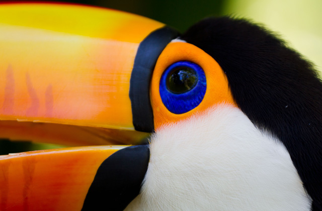 Toucan | by Flight Centre's Olivia Mair