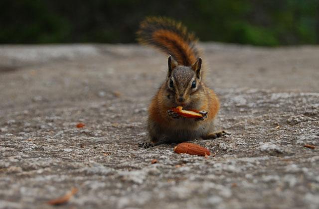 Squirrel, British Columbia | by Flight Centre's Fiona Bounsall