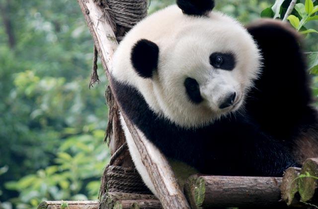 Panda House, Beijing Zoo
