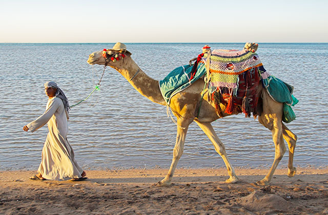 Take a camel ride on the beach