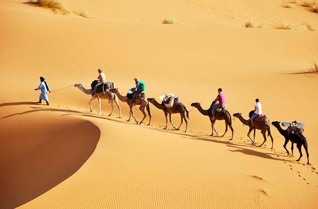A Camel Caravan