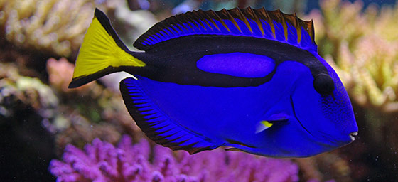 Great Barrier Reef: Finding Dory