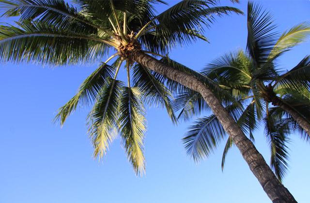 Coconut Trees | by Flight Centre's Stephen Bullock