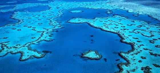 Hayman Island: Heart Reef