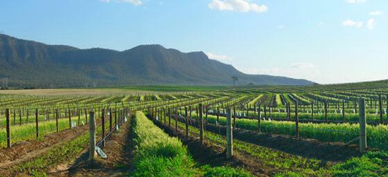 Hunter Valley: Vineyards
