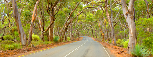 Gum Trees on a South Australian road on Kangaroo Island
