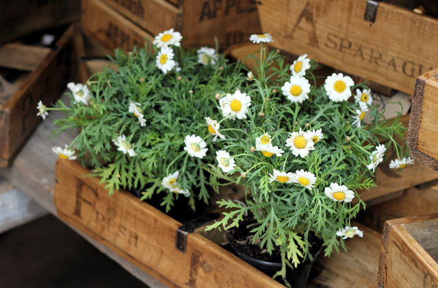 Plants For Sale, Camden Markets | by Flight Centre's Simon Collier-Baker
