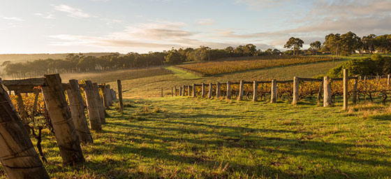 Margaret River: Rolling Vineyards