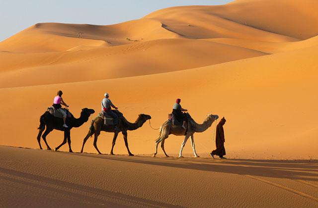 Take a Camel Safari