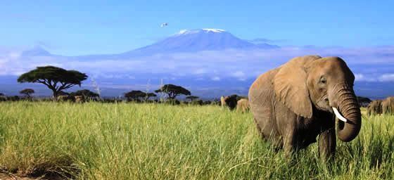 Nairobia: Mount Kilimanjaro