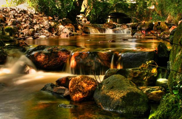 Stream near Rostrevor