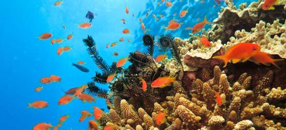 The Wonderous Great Barrier Reef