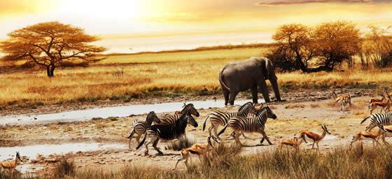 South Africa: Safari