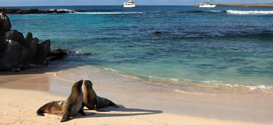 South America: Galapagos Islands
