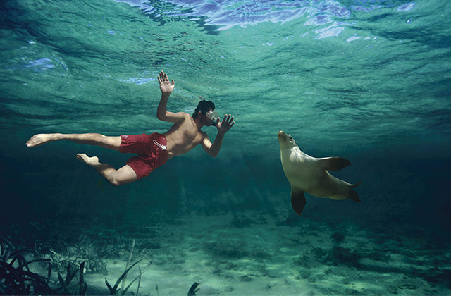 Swimming with Sea Lions, Baird Bay | © SATC