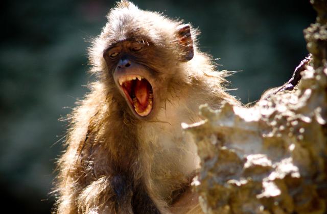 Macaque, Phong Nha | by Flight Centre's Stephen Bullock