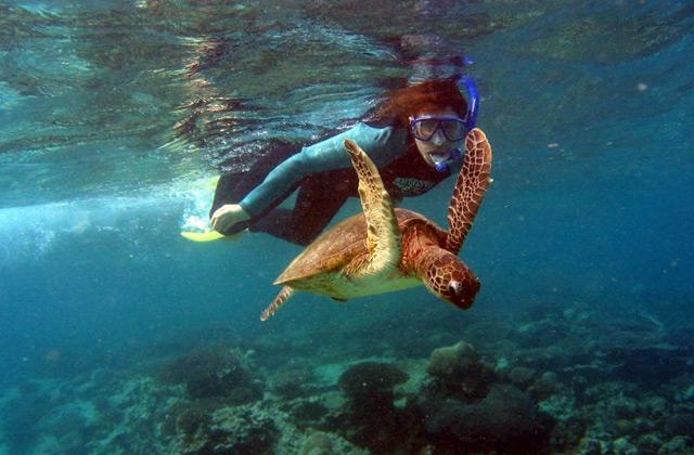 Swimming with Turtles, Ningaloo Reef