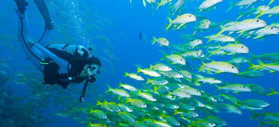 Australia: Dive the Reef