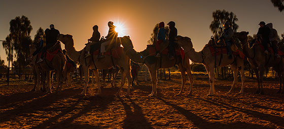 Australia: Camel Tour