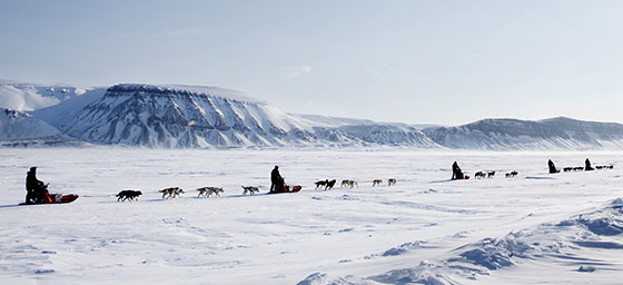 North America: Alaska Dog Sledding