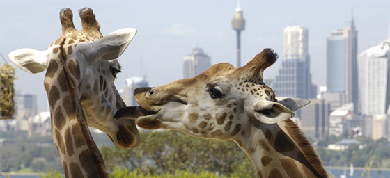 Vacances en famille: Zoo de Taronga