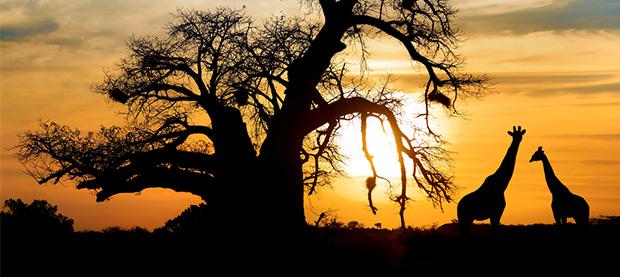 Sunset in the Savannah