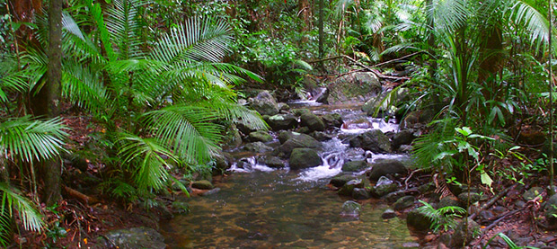 Head North and Experience The Daintree, QLD