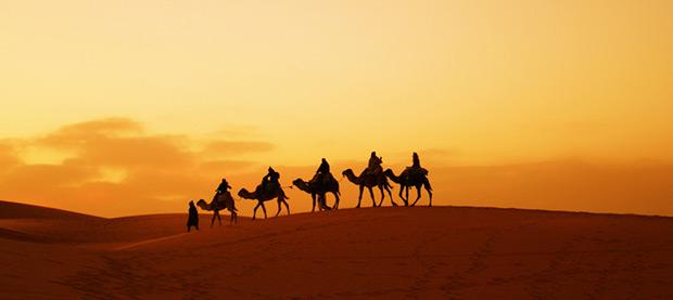 A Convoy of Camels