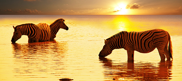Enjoy an unforgettable wildlife tour or safari