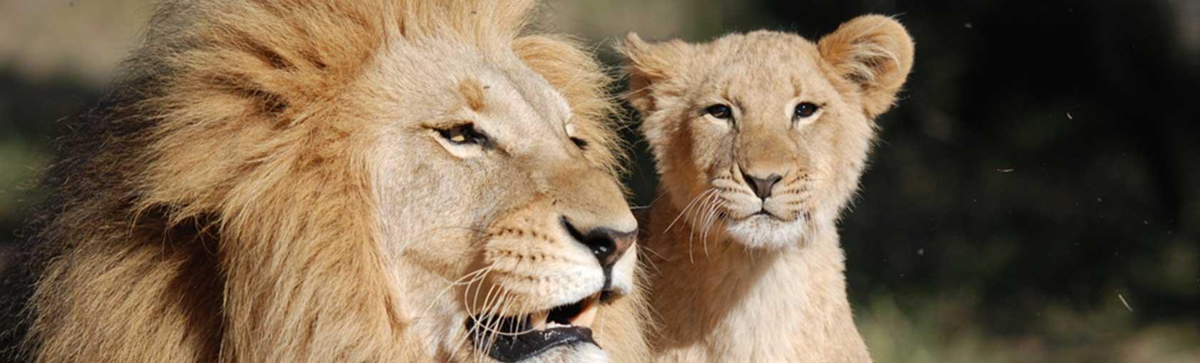 experience african safari